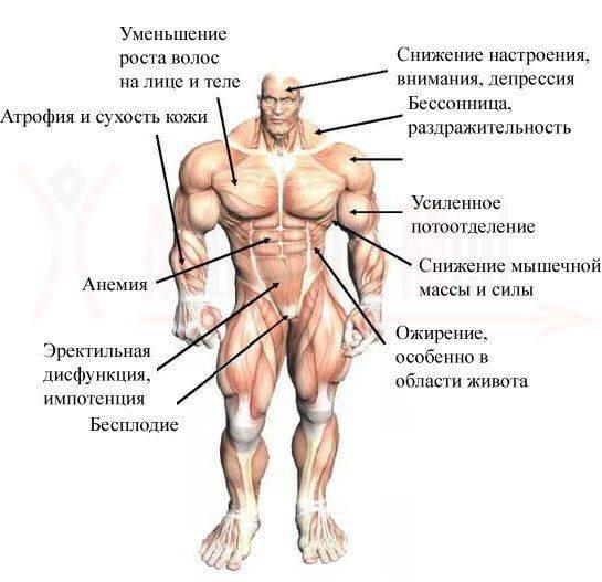 Травы, повышающие тестостерон | какие травы повышают тестостерон? | компетентно о здоровье на ilive