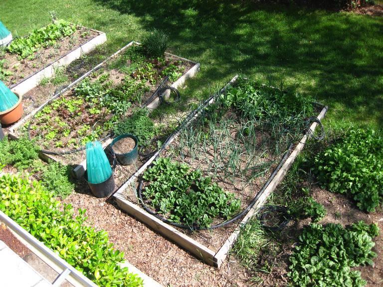 Огород для начинающих: с чего начать закладку грядок огород для начинающих: с чего начать закладку грядок