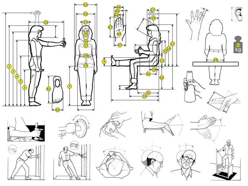 Бодибилдер декстер джексон: программа тренировок, антропометрические данные