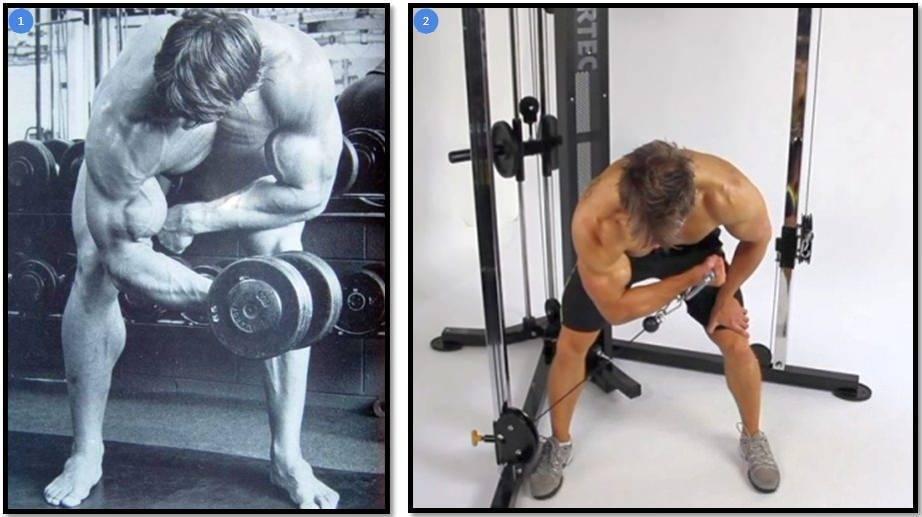 Концентрированный подъем на бицепс: какие мышцы работают, виды и техника, ошибки