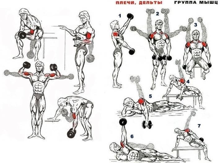 Базовые упражнения с гантелями на массу   justfitnes.ru