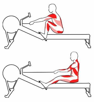 Гребной тренажер - как правильно заниматься, техника гребли