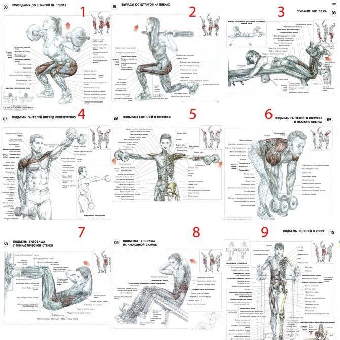 Последовательность упражнений в тренажерном зале