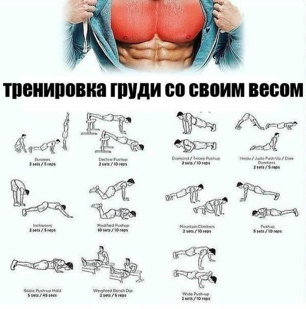 Как накачать грудь с помощью гантелей