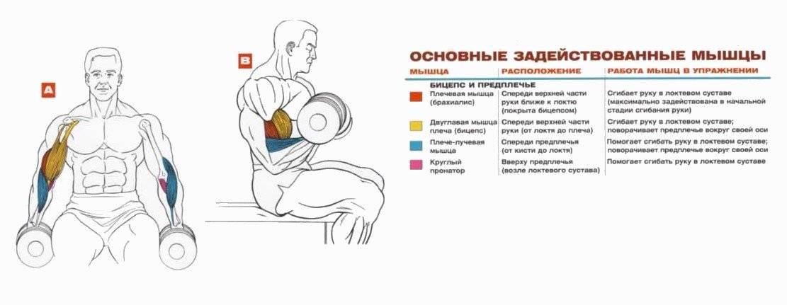 Как накачать красивые руки девушке в домашних условиях: топ 8 упражнений
