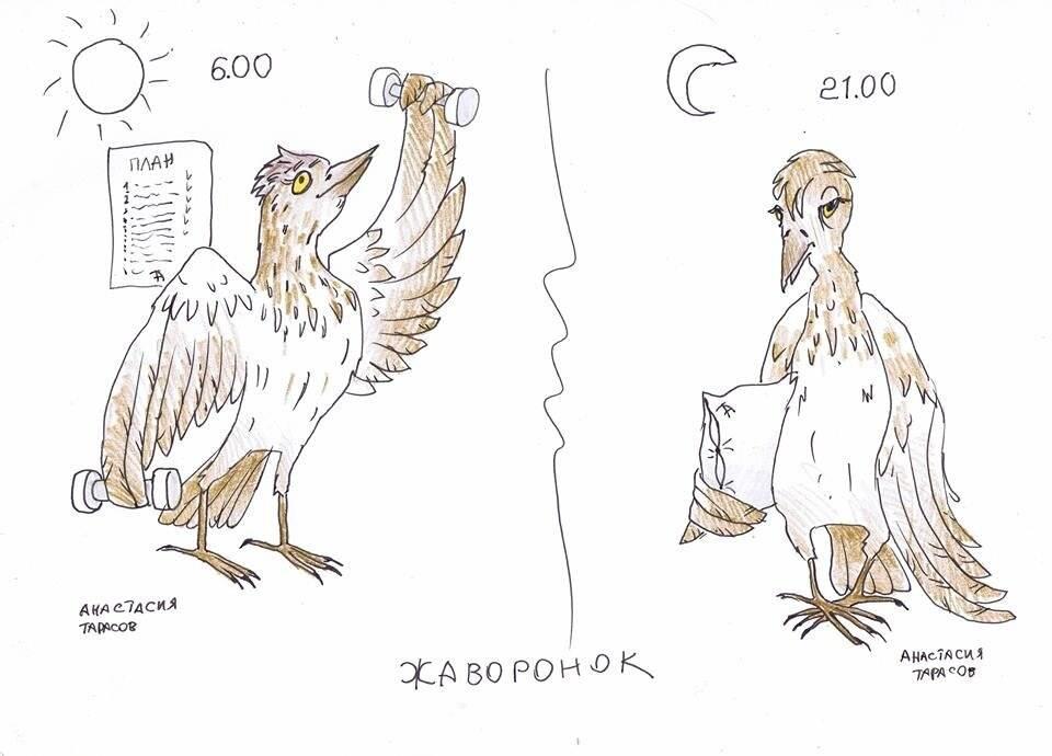Голуби, совы и жаворонки: определение хронотипа человека