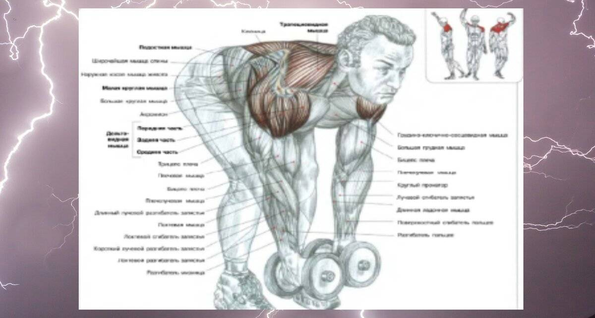 Базовые упражнения в бодибилдинге - портал обучения и саморазвития