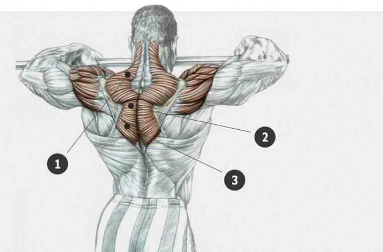Упражнения на мышцы трапеции в домашних условиях и в тренажерном зале