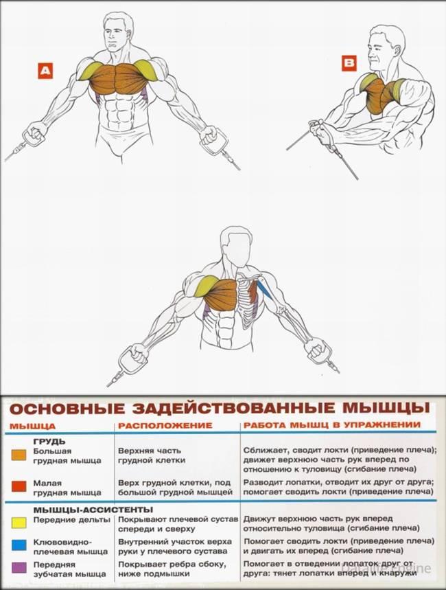 Как накачать верх груди | бомба тело