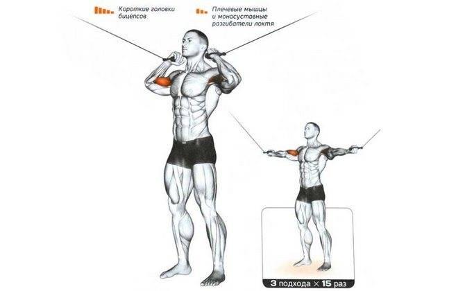 Сгибание рук с нижнего блока в кроссовере — «добивающее» упражнение для бицепса