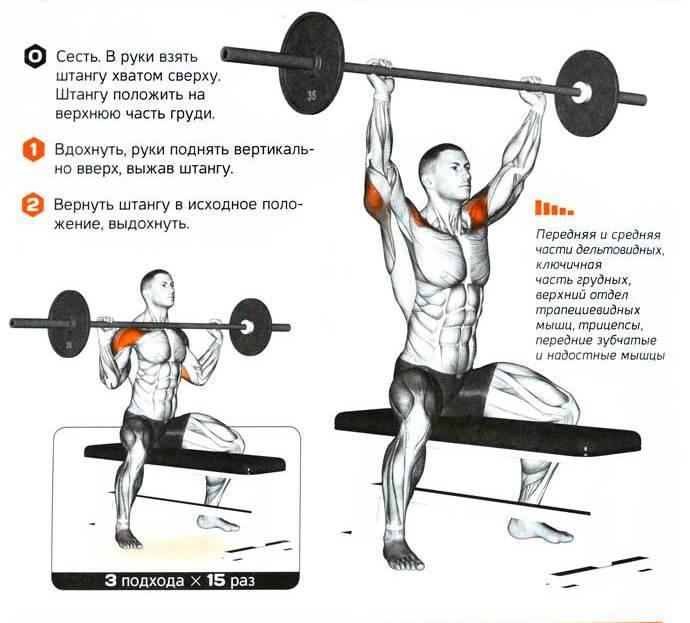 Жим гантелей под углом - это базовое упражнение для развития верхней части большой грудной мышцы, техника, примечания и анатомия строения грудной клетки