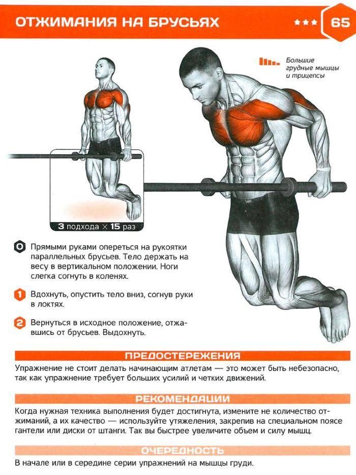 Как накачать мышцы и набрать массу? базовая программа тренировок