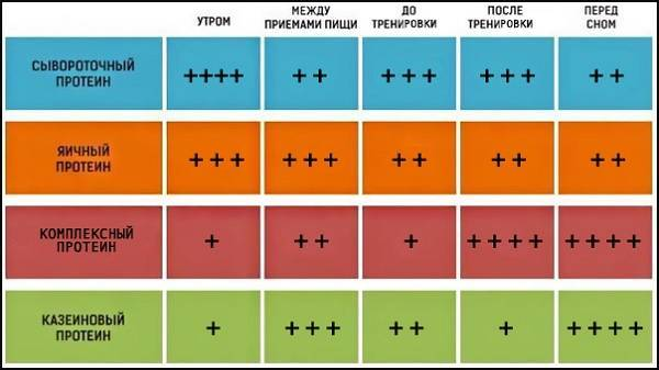 Протеин до или после тренировки. время приёма | irksportmol.ru