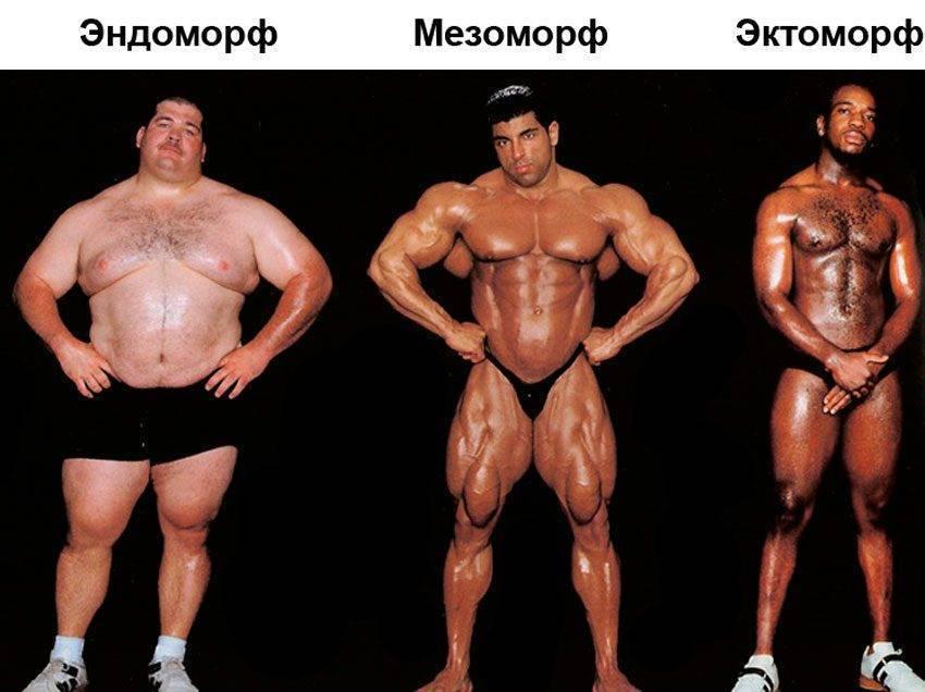 Три типа телосложения: эктоморф, мезофорф и эндоморф - rostisila.com