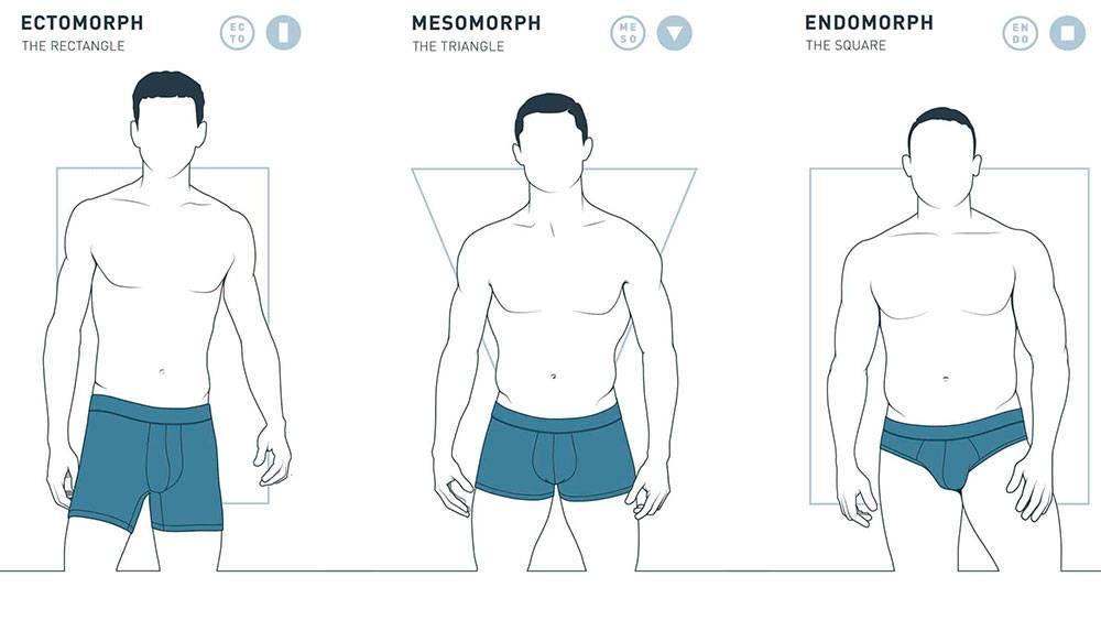 Эктоморф, мезоморф, эндоморф - как определить тип телосложения?