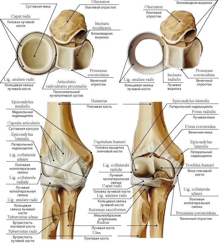 Лечение при растяжениях и разрывах связок колена: первая помощь, восстановление