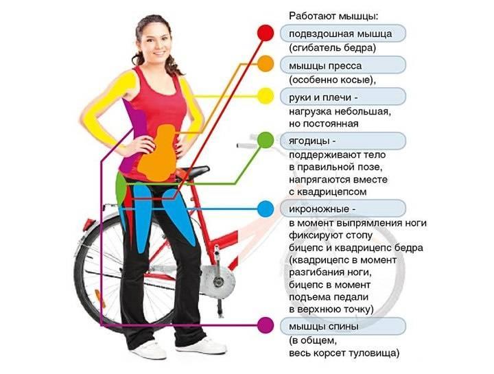 Велотренажер: польза и вред, правила занятий на нем, методические рекомендации