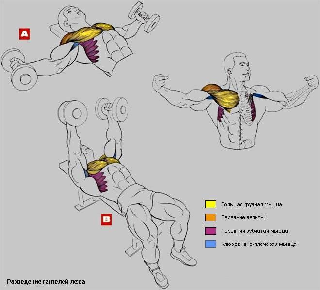 Упражнения для рук с гантелями: как правильно качать руки гантелями