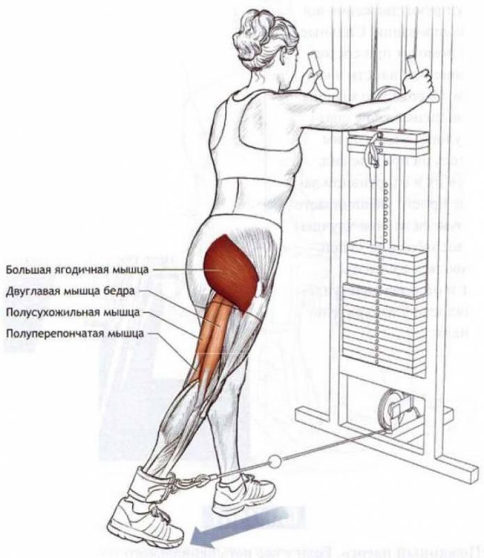 Упражнения для увеличения ягодиц: эффективный комплекс