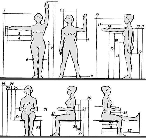 Идеальные пропорции тела в бодибилдинге