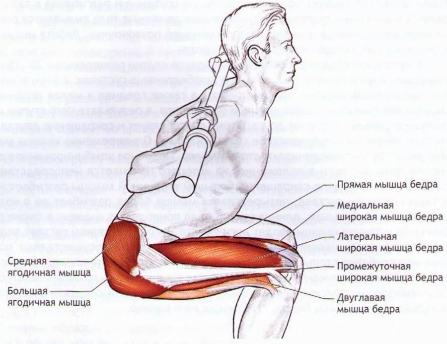 Упражнение пистолетик какие мышцы задействованы. «пистолетик» или выполнение приседаний на одной ноге. главное – безопасность