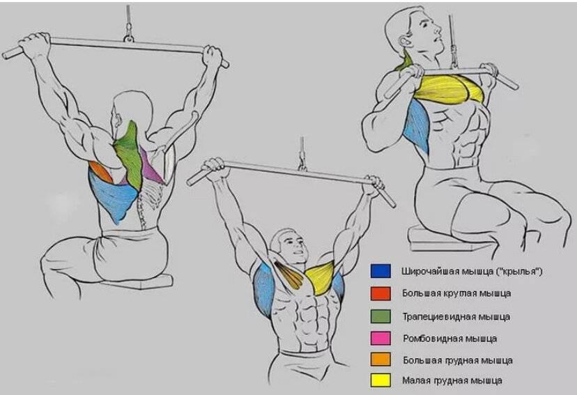Тяга верхнего блока параллельным хватом: какие мышцы работают, техника выполнения