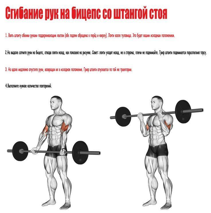 Упражнения на бицепс со штангой: сгибание рук, подъем грифа и другие упражнения на бицепс