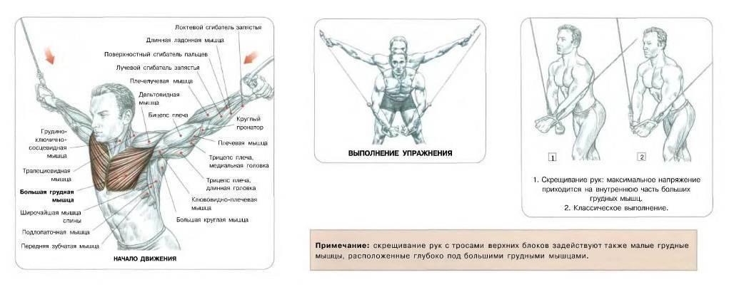 Сведение рук в тренажере, особенности, повышение эффективности