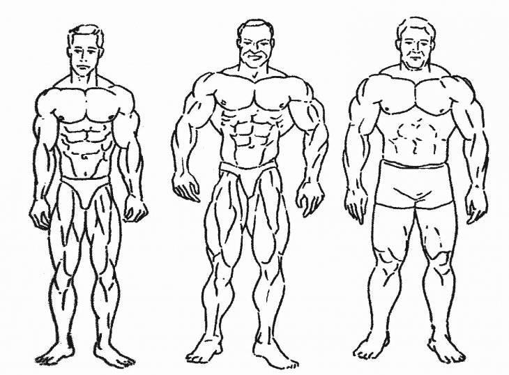 Типы телосложения женщины: астеническое, нормостеническое, гиперстеническое