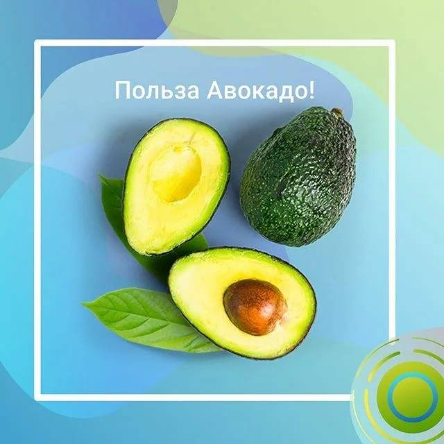 Вред и польза авокадо