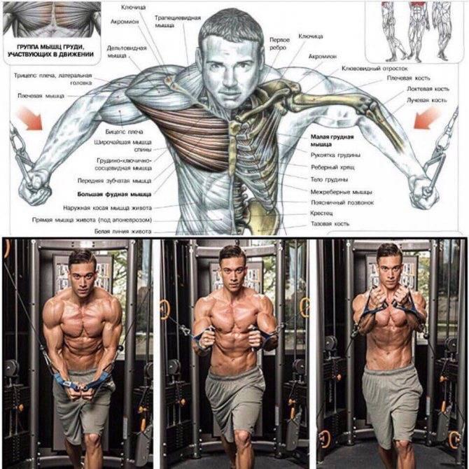 Сведение рук в кроссовере - задействованные мышцы, правильная техника, варианты упражнения