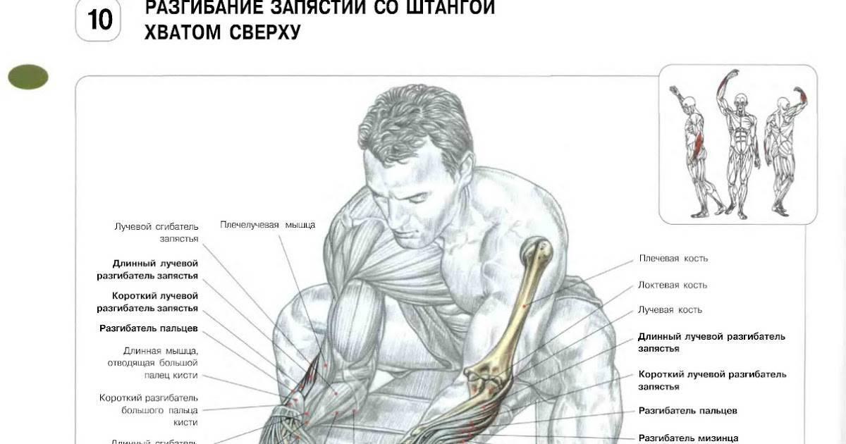 Как накачать бицепс в домашних условиях: лучшие техники и упражнения - tony.ru