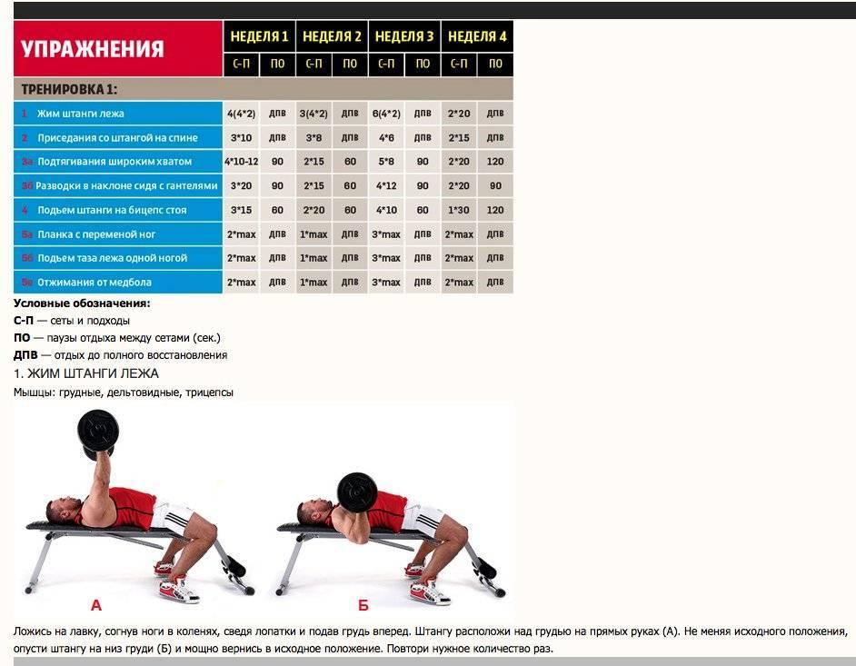 Лучшая программа тренировок на массу: бодибилдинг для настоящих мужчин
