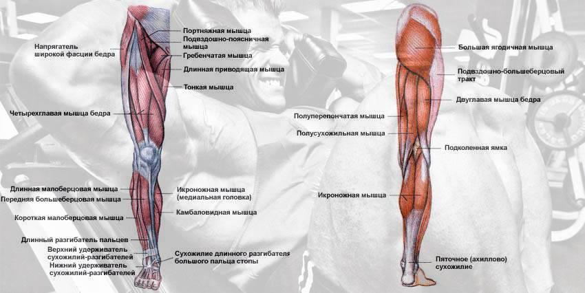 Комплекс упражнений для приводящих мышц бедра