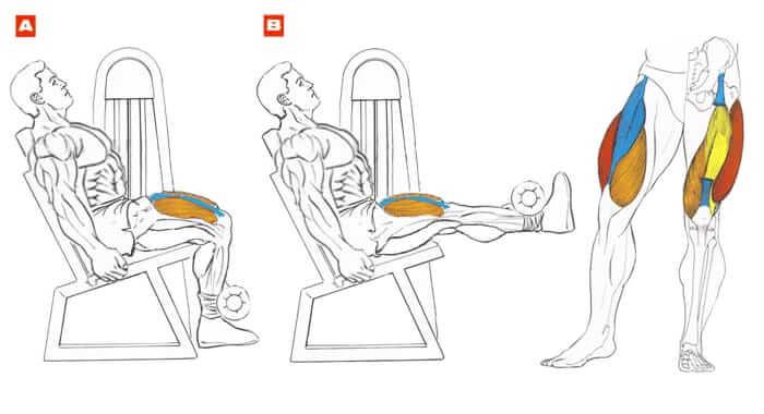 Сгибание ног лежа в тренажере: техника выполнения, ошибки
