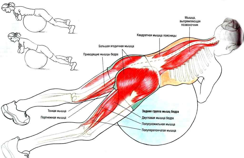 Виды тренажеров для гиперэкстензии, техника выполнения упражнения