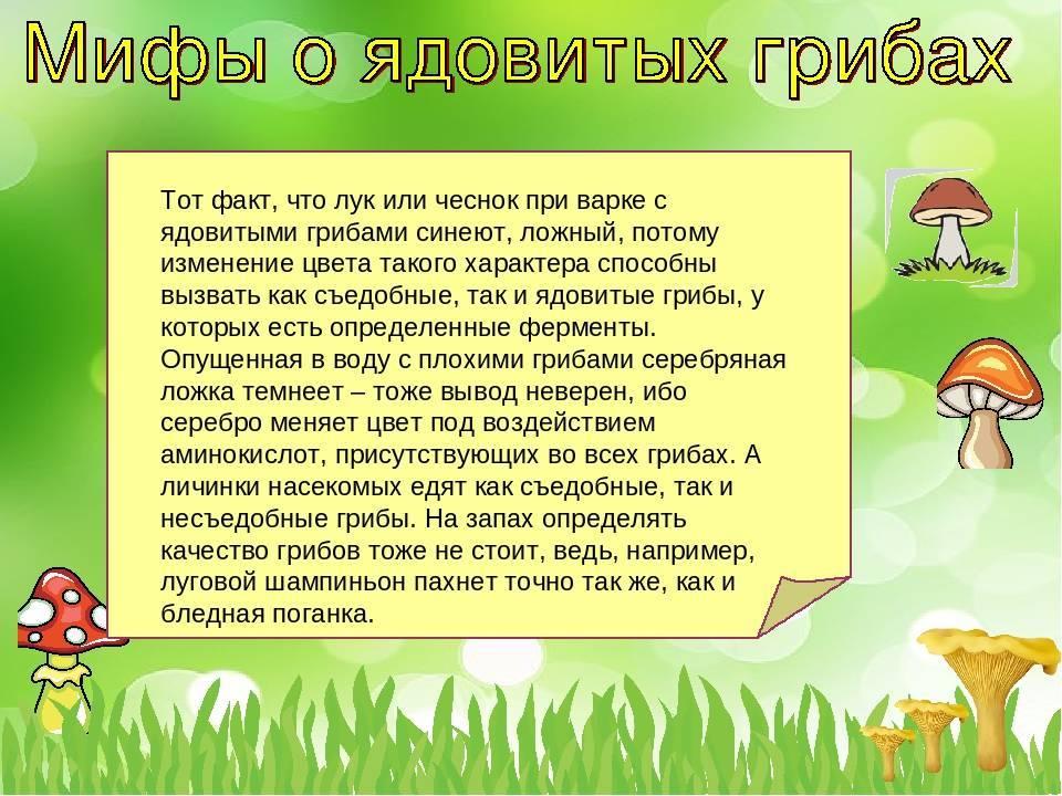 10 мифов о лесных грибах » будьте здоровы!