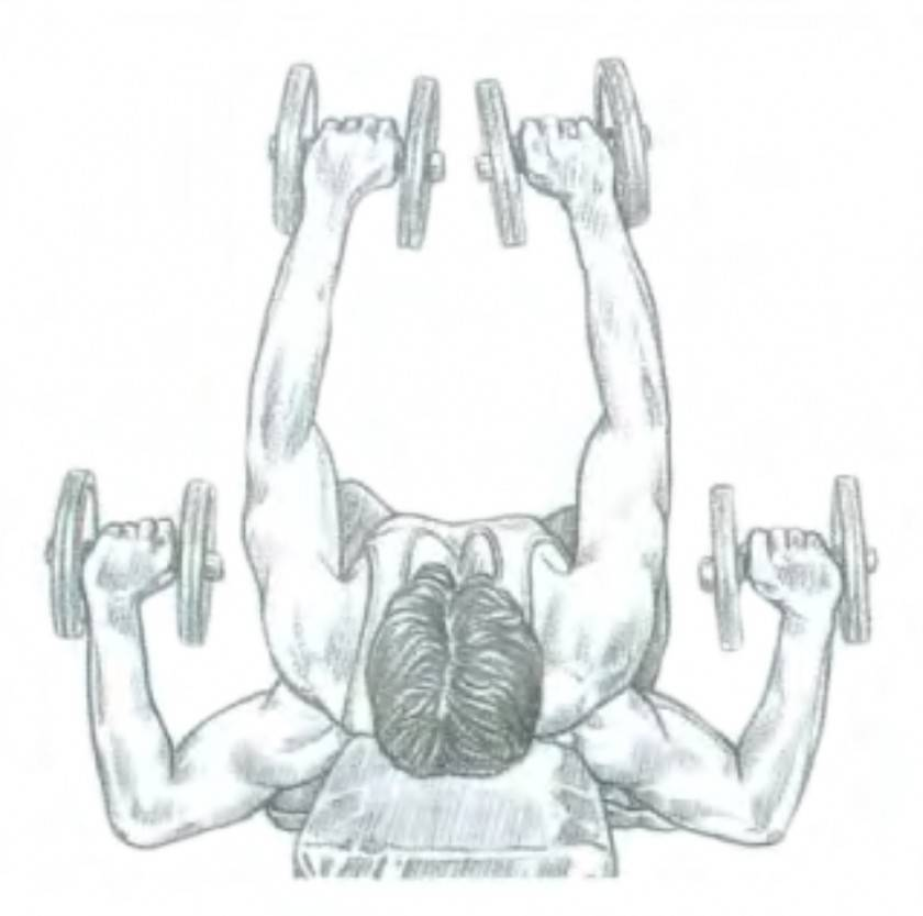 Жим гантелей лежа: как правильно выполнять упражнение и какие есть вариации