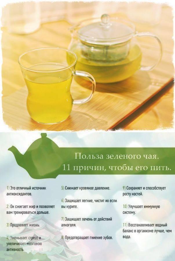 Как пить зеленый чай для похудения, помогает ли зеленый чай похудеть и как его выбрать   доктор борменталь