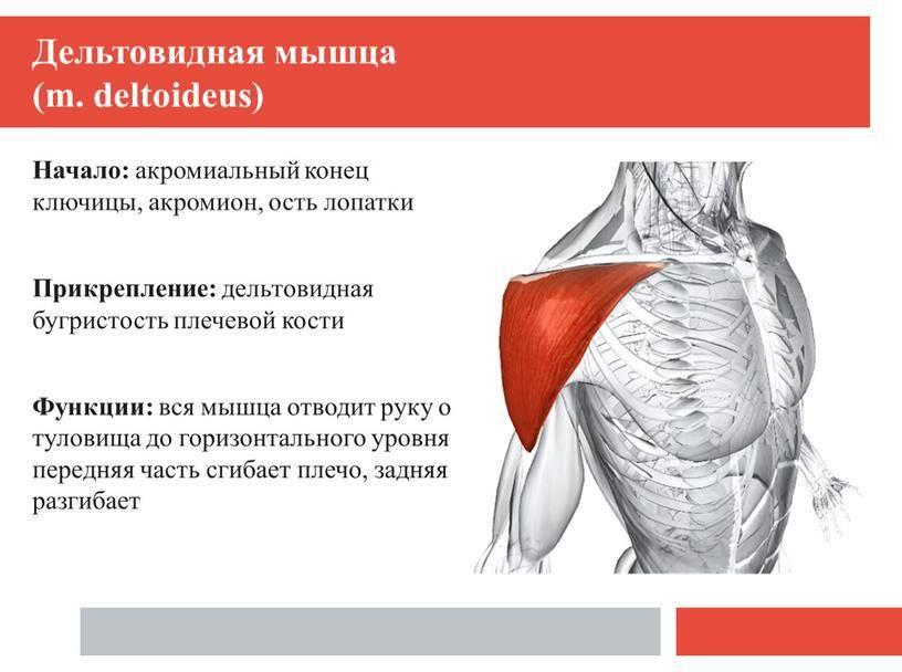 Субакромиальный болевой синдром | kinesiopro