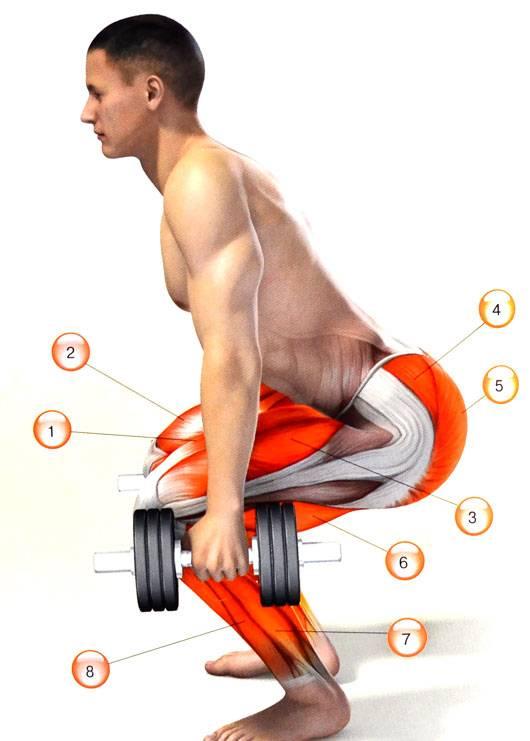 Приседания с гантелями: виды и техника выполнения упражнения