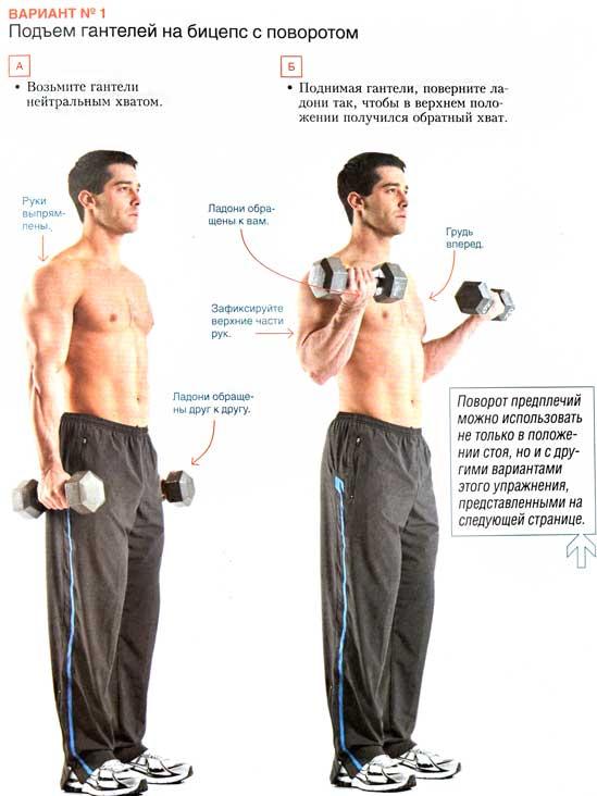 Упражнения на бицепс с гантелями