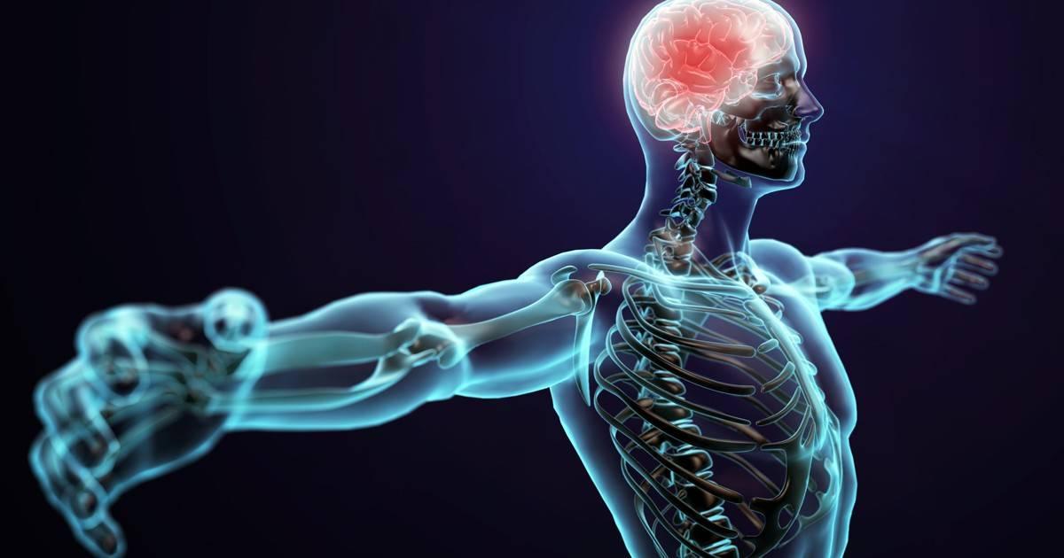 Мышечная система — большая медицинская энциклопедия