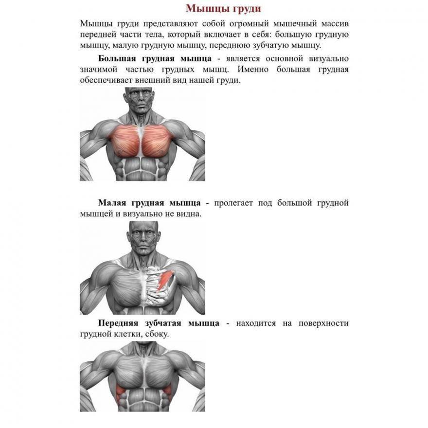 Топ 3 упражнения тренировки верха грудных мышц для мужчин