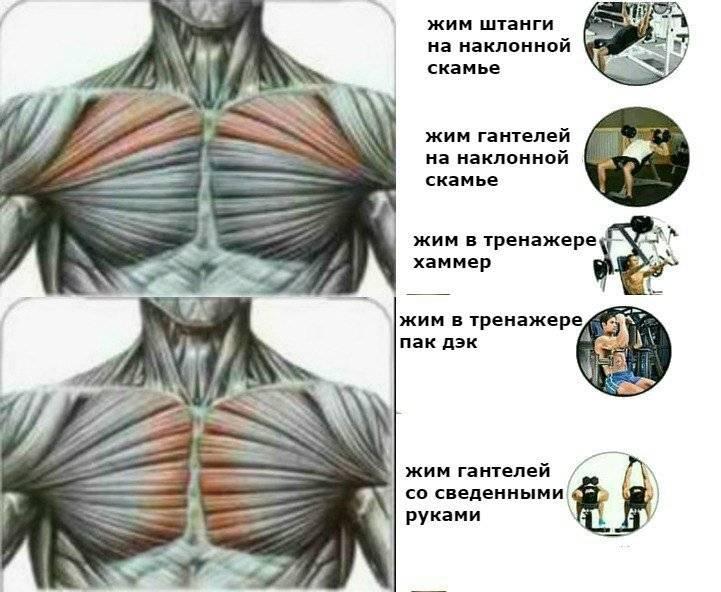 Как накачать верхнюю часть грудных мышц в домашних условиях быстро