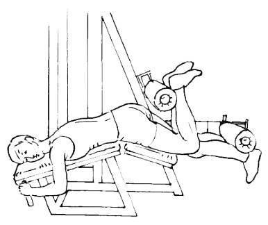 Упражнения с гантелями для похудения   компетентно о здоровье на ilive