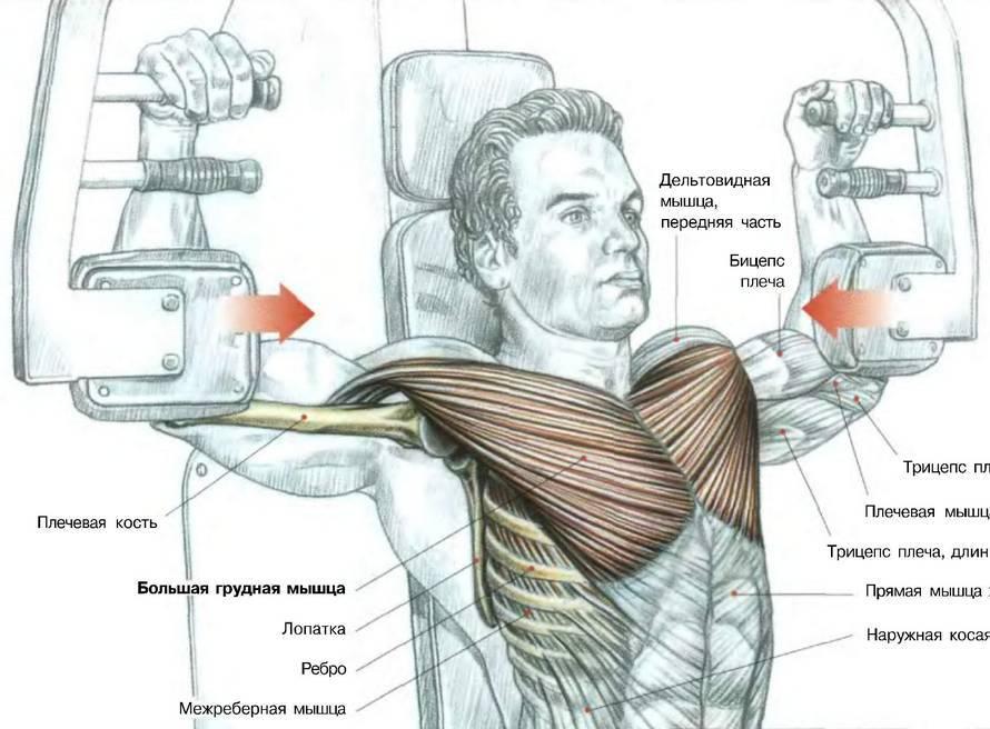 Тренажеры для грудных мышц
