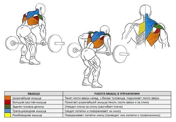Как накачать широкую спину в тренажерном зале: лучшие упражнения для быстрого роста мышц (фото, схемы)