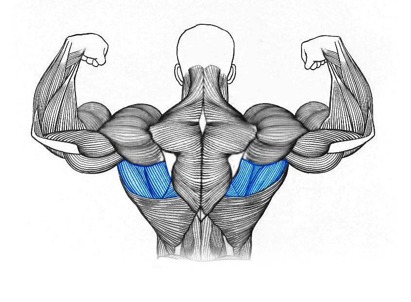Растяжка плеч и плечевого пояса