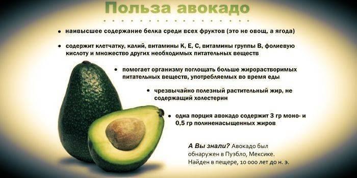 Авокадо: польза и вред для организма женщин и мужчин